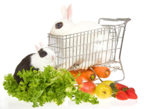 2B Mindset 2  bunnies