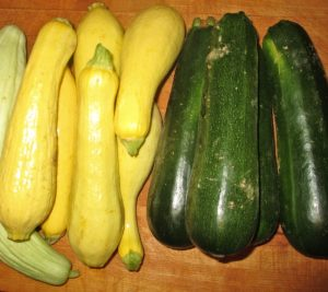yellow squash and green summer squash