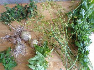 Garlic herb garden